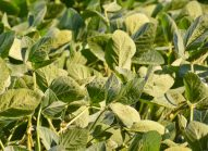 soja-planter-bonduelle