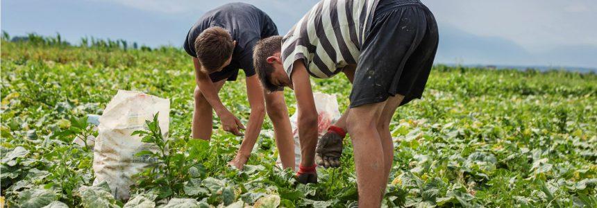 harvest-cueillette-assiette-fondation-bonduelle