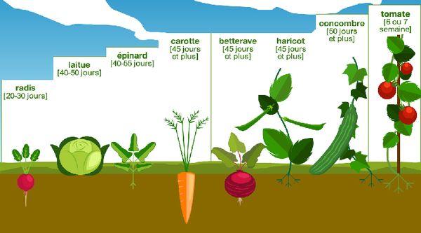 croissance-légumes-fondation-bonduelle