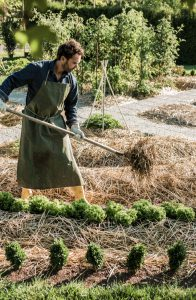 permaculture-potager-agroecologie_4
