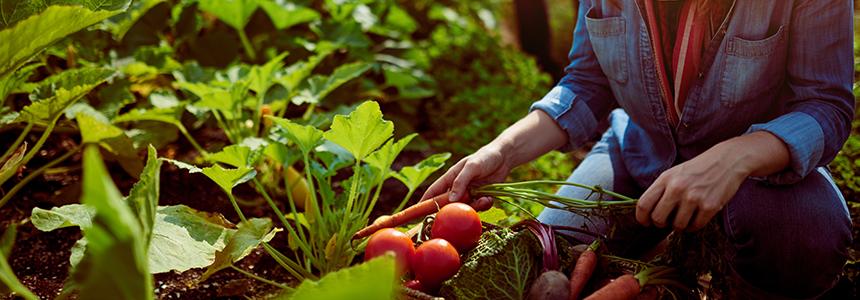 astuces-developper-jardin-permaculture