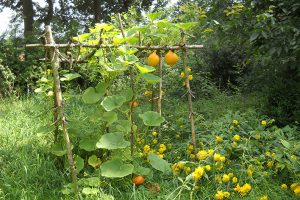 conception-permaculture