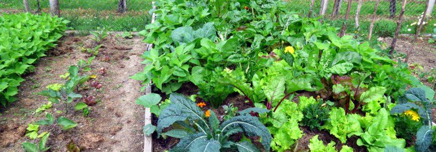 rentabilite-permaculture