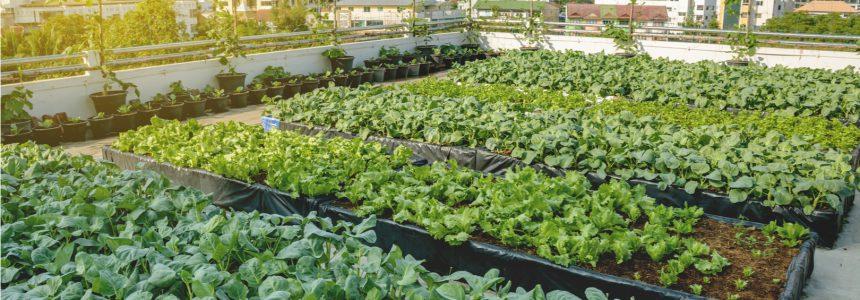 epopee-fermes-urbaines-montreal