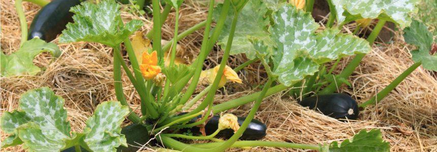 phenoculture-permaculture-manquez-temps