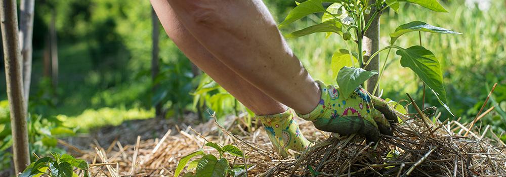 comportement-durable-responsable-paillis-agriculture
