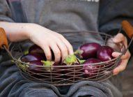 aubergine-ramasser-bonduelle