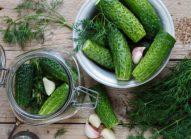 cornichon-potager-legume