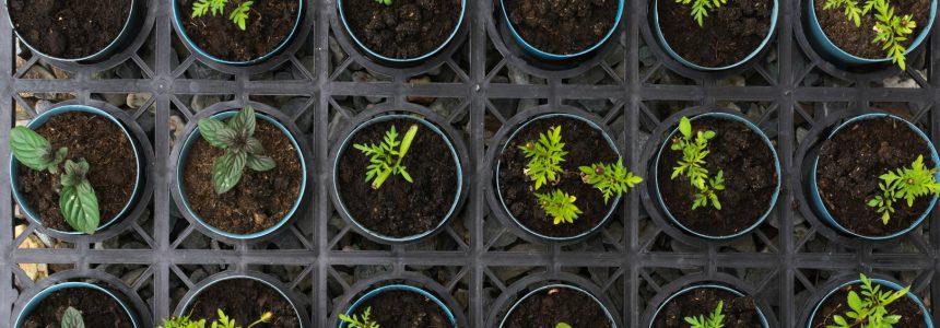 teaching-kit pédagogique-botanique-fondation-bonduelle