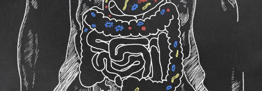 eaten-corps-humain-légume-digestion-fondation-bonduelle