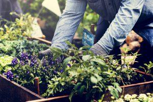 agriculture-urbaine-jardins-ville