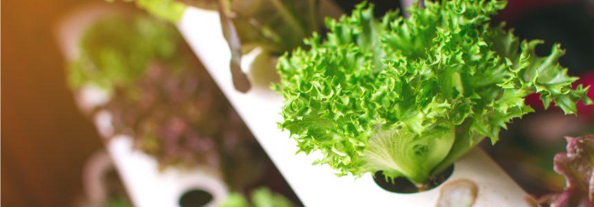 methodes-cultiver-legumes-hors-sol
