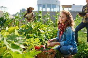 ville-agriculture-urbaine